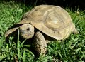 Turtle Stock Image - 53362591