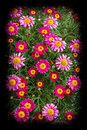 Bunch Of Flowers Royalty Free Stock Photos - 53371928
