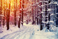 Winter Forest Royalty Free Stock Photography - 53376197