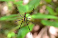 Spider On The Web Stock Image - 53379981