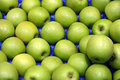 Apples Royalty Free Stock Photography - 5342667
