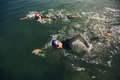 Swim Portion Of Triathlon Competition Royalty Free Stock Images - 53416809