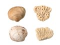 Seashells And Corals Stock Image - 53423661