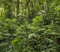 Tropical Forest Background Stock Images - 53454104