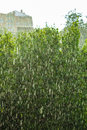 Rainy Outside Window Green Background Texture. Royalty Free Stock Image - 53483566