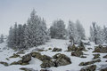 Snow-covered Forest On The Slopes Of The Mountain. Royalty Free Stock Photo - 53491245