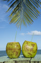 Two Green Coconuts Palm Tree Tropical Sea Stock Photography - 53495812