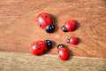 Ladybirds Made Of Wood Royalty Free Stock Photo - 53510455