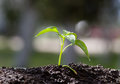 Young Plant Growing Royalty Free Stock Images - 53523619