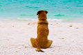 Alone Dog Sit On The Beach Royalty Free Stock Image - 53541956