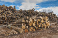 Pile Of Wood Logs Royalty Free Stock Photo - 53547285