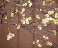 Blossoming Tree Branches With New Buds New In Spring Stock Photography - 53554812