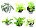 Set Of Houseplant In Pots Royalty Free Stock Photography - 53562447