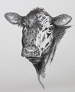 Cow Pencil Drawing Royalty Free Stock Image - 53583746