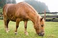 Brown Pony Grazing Royalty Free Stock Photo - 53604305