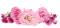 Flower Head Of Roses Stock Images - 53675824