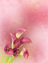 Beautiful Background Blur With Red Calla Flowers Stock Photography - 53676922