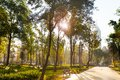 Central Alameda Park Morning In Mexico City Royalty Free Stock Photos - 53682418