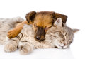 Cat And Dog Sleeping Together. Isolated On White Background Royalty Free Stock Images - 53683499