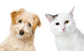 Cat And Dog Looking And Camera. Isolated On White Background Royalty Free Stock Image - 53683536