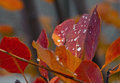 Golden Orange Colors Of Fall With Rain Stock Image - 53685801