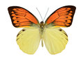 Butterfly Red Yellow. Stock Photos - 53696433