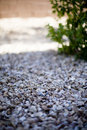 Rocks With A Plant Stock Image - 5374921