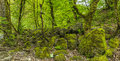 Stones Covered With Moss In The Forest Stock Photos - 53716213