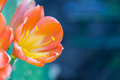 The Flowers On Succulent Royalty Free Stock Image - 53718536
