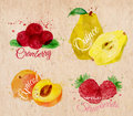 Fruit Watercolor Cranberry, Quince, Apricot, Wild Stock Photo - 53721440