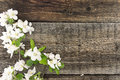 Spring Apple Tree Blossom On Rustic Wooden Background Stock Images - 53772034