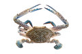 Horse Crab On White Royalty Free Stock Photography - 53792397