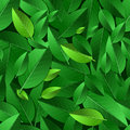 Vector Seamless Summer Pattern With Green Leaves. Nature Ecology Stock Photography - 53798232