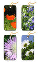 Gift Tags Whis  Flowers Stock Photos - 5381423