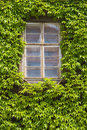 Ivy Windows Stock Image - 5382831