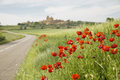 Red Poppy Flowers On A Countryside Road Royalty Free Stock Photography - 53837757