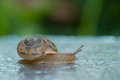 Snail Stock Photography - 53928452