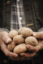 Close-up Of Male Hands Holding A Potato Royalty Free Stock Photos - 53957358