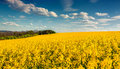 Sunny Summer Morning In Field Of Blossoming Colza Stock Photos - 53958103