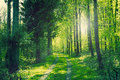 Path In A Green Forest Stock Photos - 53977323