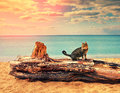 Cat On The Beach Royalty Free Stock Photography - 53980167