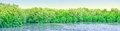 Mangrove Forests Royalty Free Stock Image - 53980296