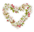 Spring Watercolor Apple Blossom Heart Royalty Free Stock Images - 53985999