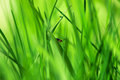 Red Insect On Young Green Grass Royalty Free Stock Image - 53986266