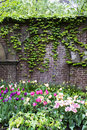 Ivy Wall Garden Royalty Free Stock Photo - 54004295