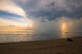 Storm Clouds Sea And Dog Royalty Free Stock Photos - 54029998