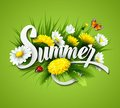 Fresh Summer Background With Grass, Dandelions And Royalty Free Stock Images - 54071849