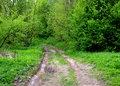Muddy Road In The Forest Stock Photo - 54084670