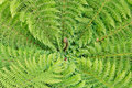 Silver Fern Fronds Stock Image - 54088131