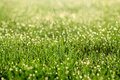 Dew On The Grass. Sunny Abstract Green Nature Background. Stock Image - 54100611